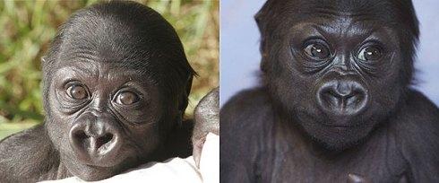blog_gorila3