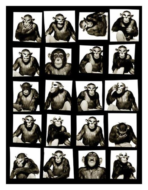 monkeys with masks